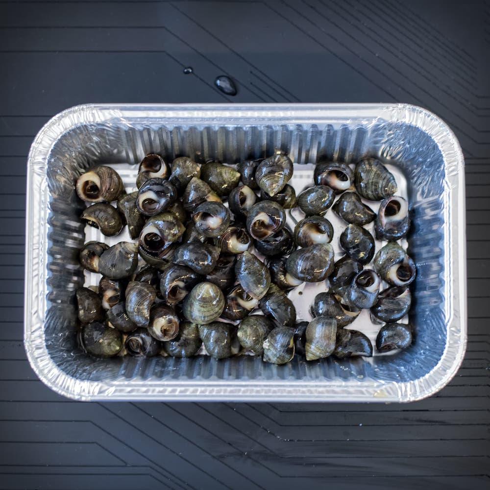 coquillages-bigorneau